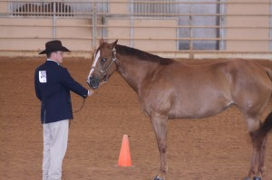 Horse-Show-and-Final-Review-031