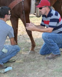 dr-ryan-lee-equine-services-texas