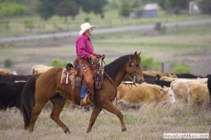 equine-cattle-ranch-bryan-tx