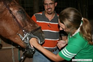 horse-dental-exams-mobile-college-station-tx