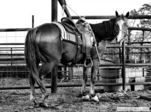 mobile-equine-vet-college-station-tx