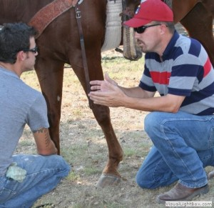 mobile-horse-exams-dr-ryan-lee-texas